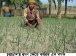Garlic cultivation fChuield of adanga 18.02.11