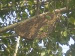 honey-comb-1