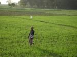 paddy-field-1