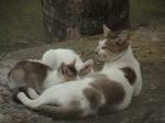 pussy feeds milk Chuadanga (CAT) 13.12.10-1