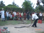 Deshi Magician with Snake on Street-2