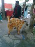 Pet Animal (3) in montu miyar bagan bari