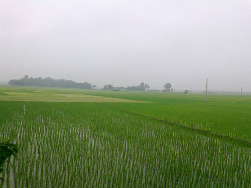 Nature view in Chuadanga-Kustia Highway (12)