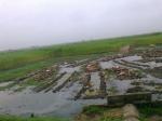 Nature view in Chuadanga-Kustia Highway (20)