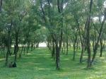 Jatiyo Sriti Shoudho-National Martyrs' Memorial-Trees